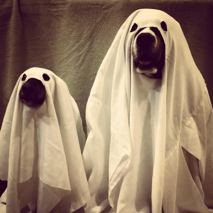 ghost dogs.jpg
