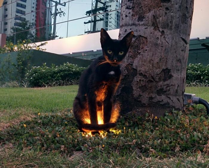 glow cat.jpg