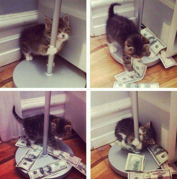 stripper pussy.jpg
