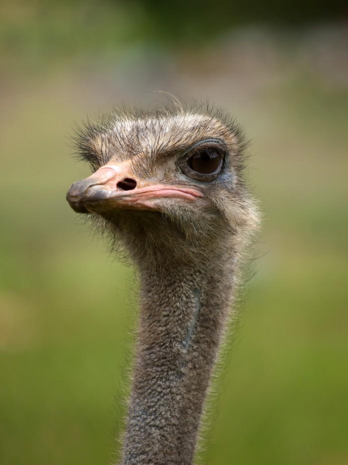 A hairy bird.jpg