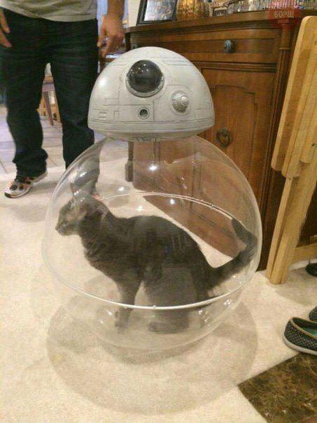 BB-8 Cat Toy.jpg