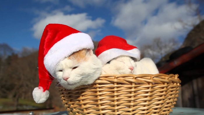 Christmas Cat Basket.jpg