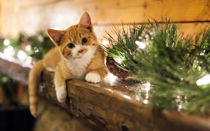 Christmas Light Kitty.jpg