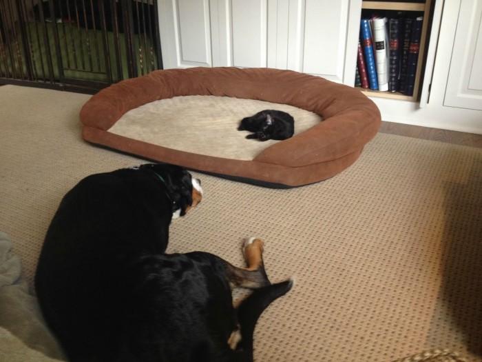Kitten Bed.jpg