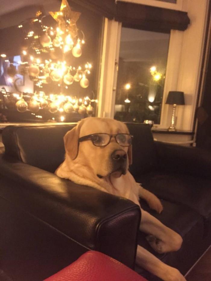 Smart Dog at christmas.jpg