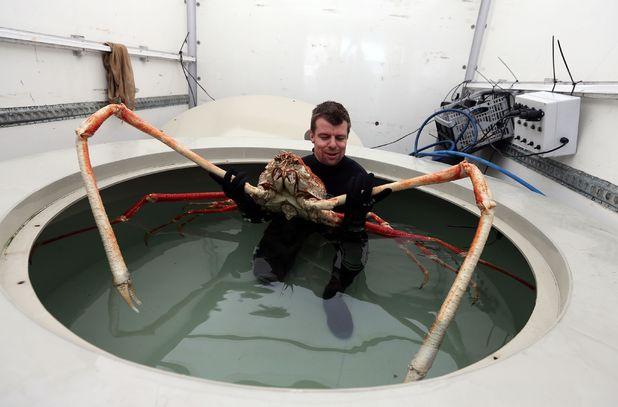 big daddy odd_giant_crab