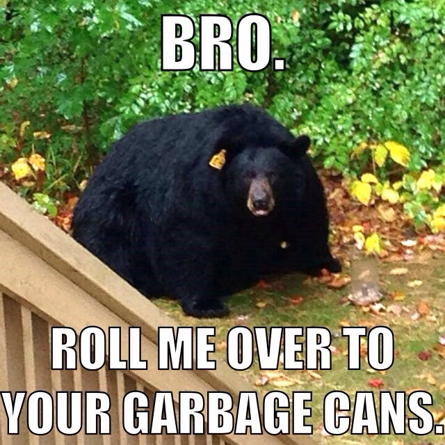 bro bear.jpg
