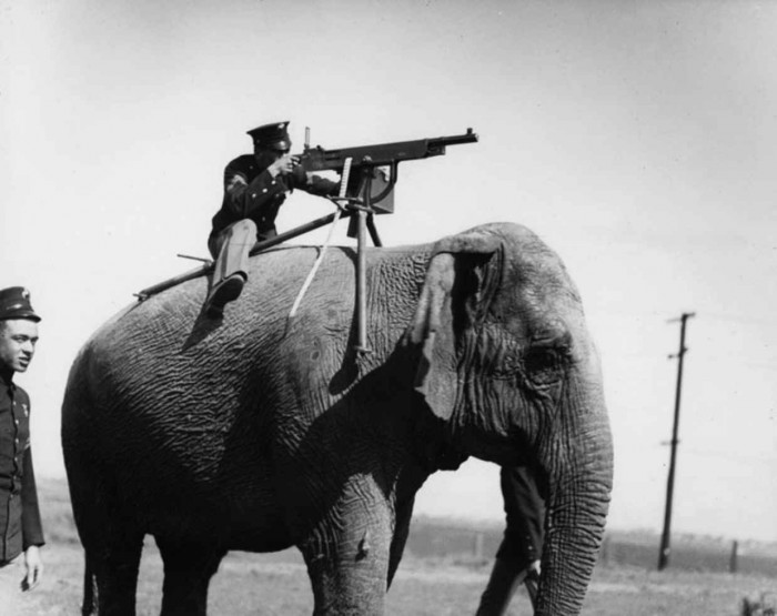 elephant heavy infantry.jpg