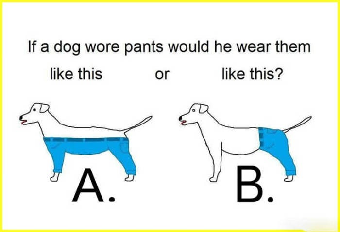 if a dog wore pants.jpg