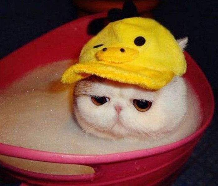 sad bath cat.jpg