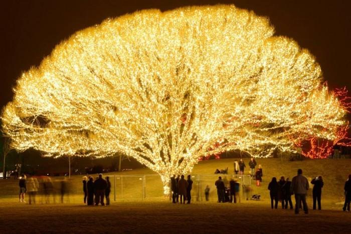 the tree of life in Draper Utah.jpg