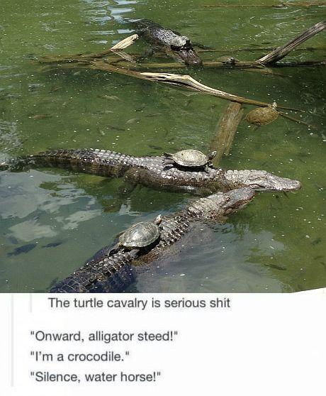 turtle_cavalry