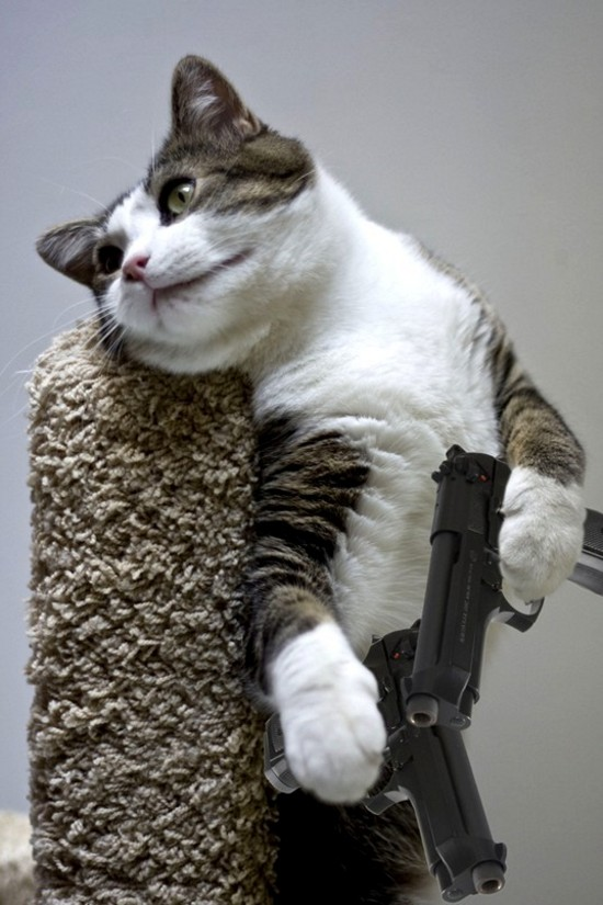 Gun Cat Gun Cat wtf Weapons lolcats