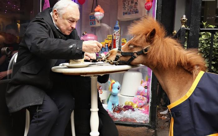 Pony Snack.jpg