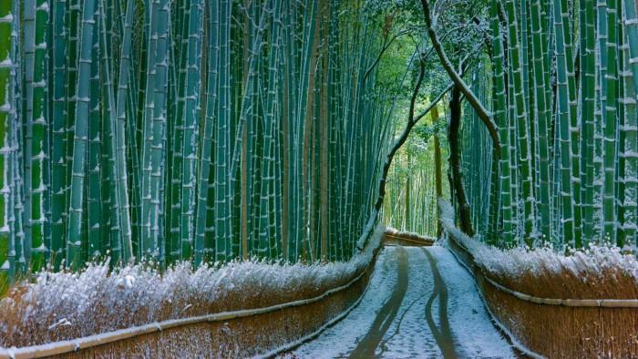 Sagano Bamboo Forest - Arashiyama Kyoto, Japan.jpg