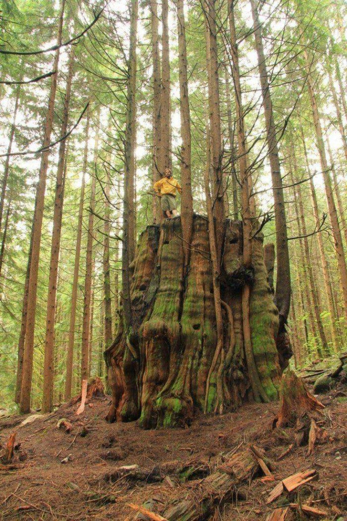 awesome living tree stump