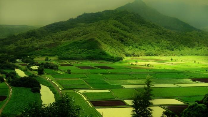green lands.jpg
