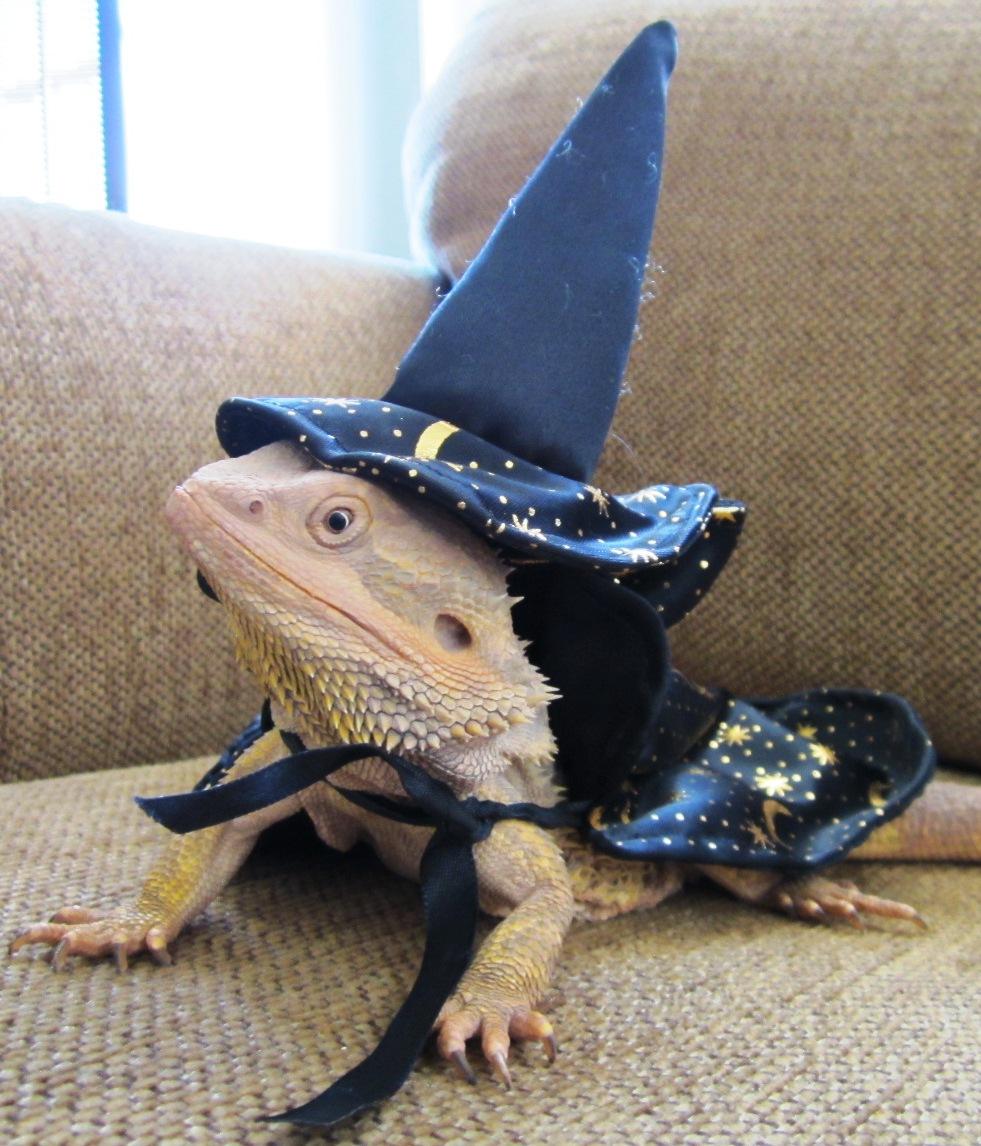 lizard wizard.jpg
