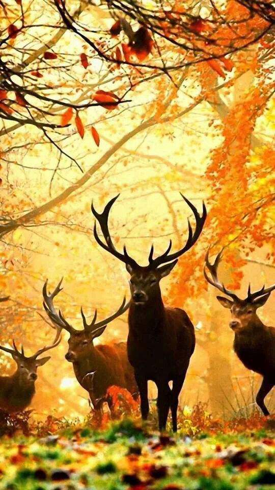 Stags in the Forest.jpg