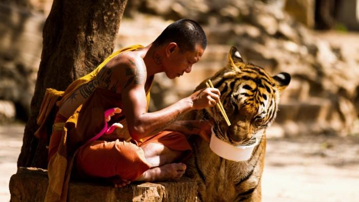 Tiger Feeding.jpg