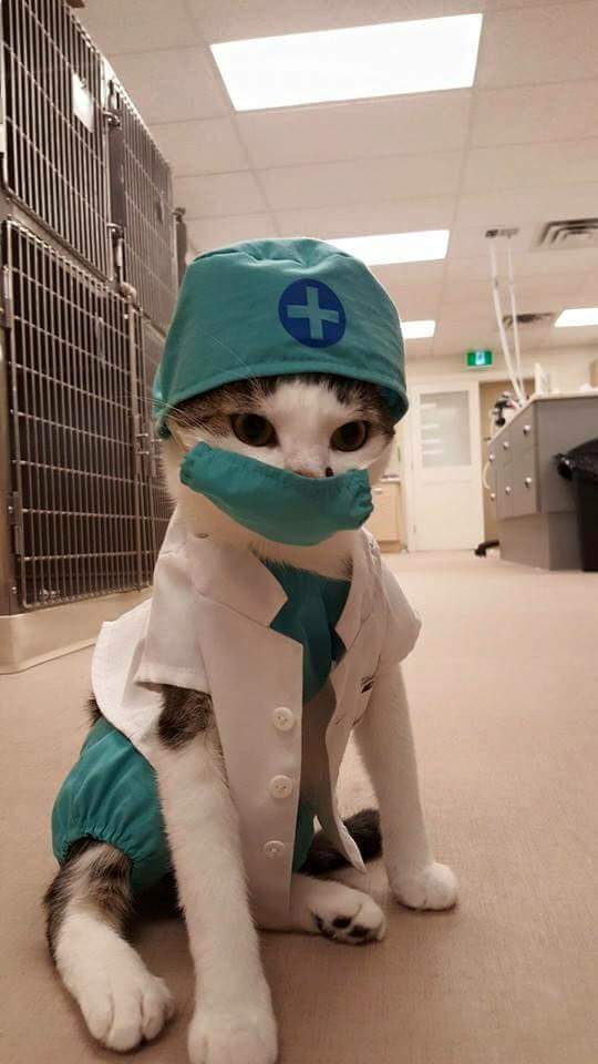 medical cat has your attention.jpg