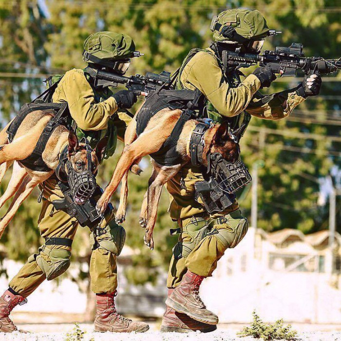 military dog walker 700x700 military dog walker wtf Weapons Military Cute As Hell Animals