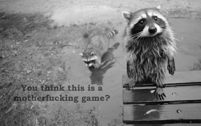 think this is a mother fucking game 700x438 think this is a mother fucking game Wallpaper Raccoons Cute As Hell Animals