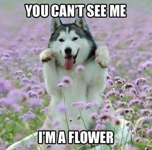 I'm a flower.jpg