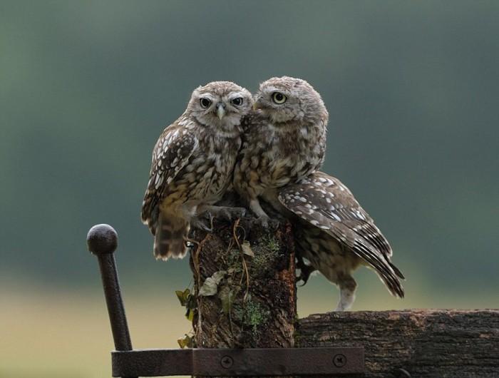 three owls.jpeg