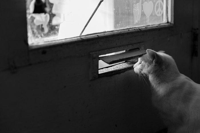 letter cat.jpg