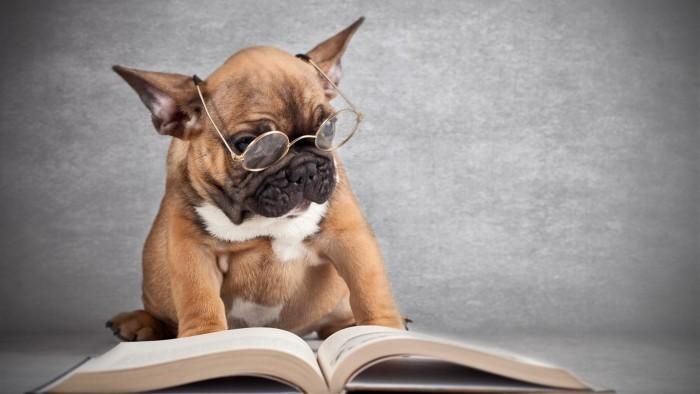 well read pug.jpg