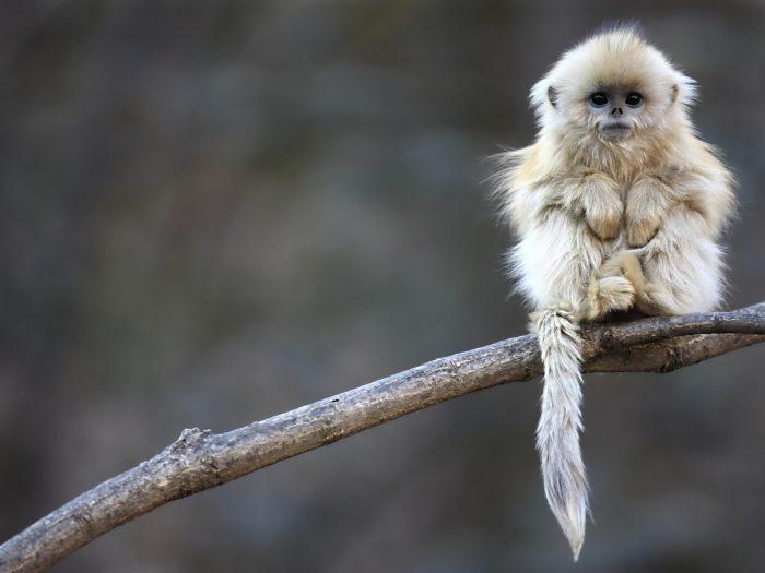 Furry Monkey.jpg