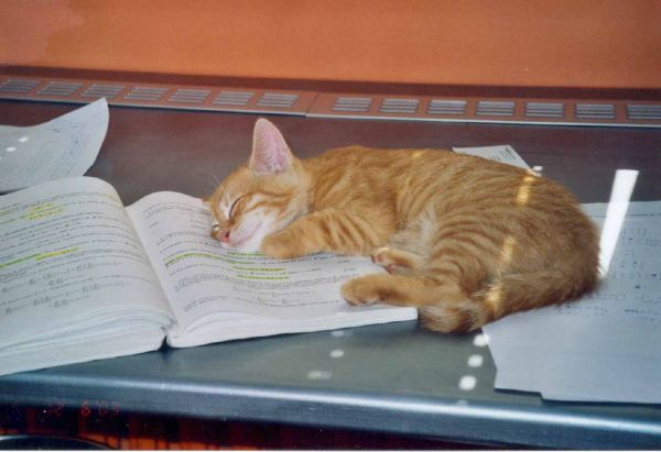 Study Cat.jpg