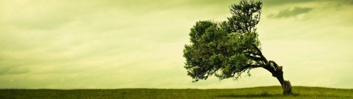 Windswept Tree.jpg
