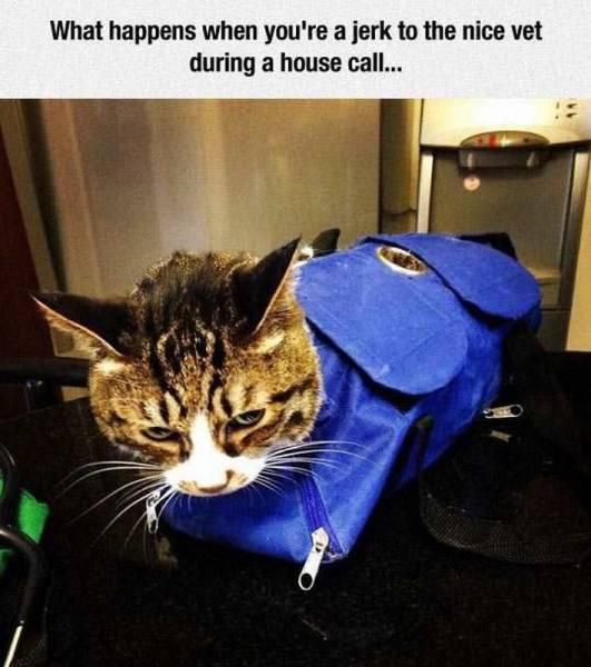 jerk cat.jpg