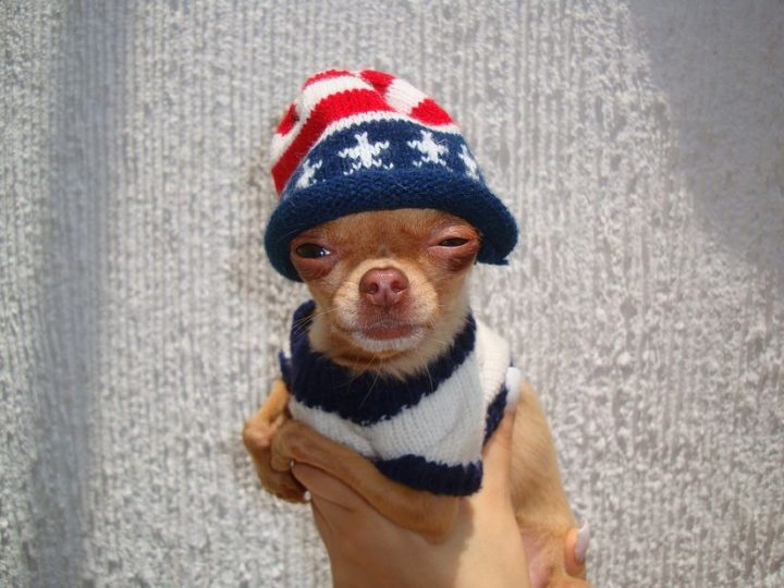 American Squint 720x540 American Squint Fourth Of July Cute As Hell Animals