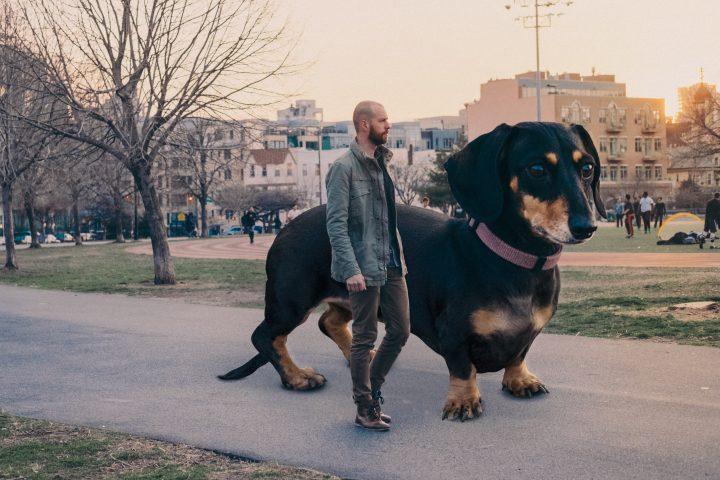Big Dog 720x480 Big Dog