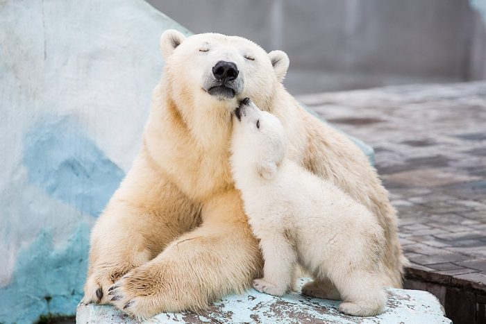 Polar Bear Lovers.jpg