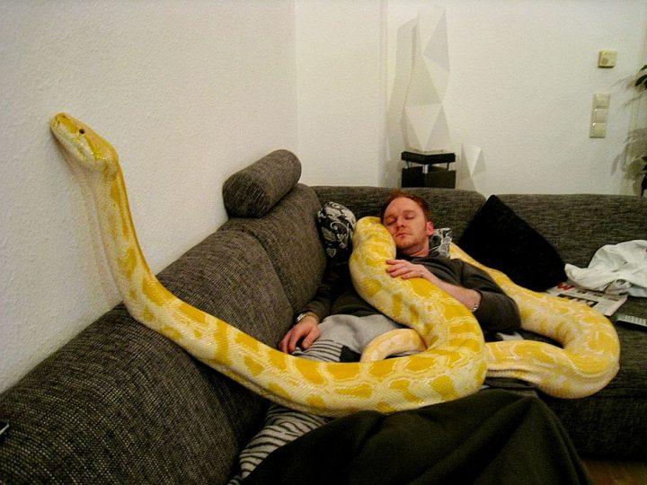 Snake Nap.jpg