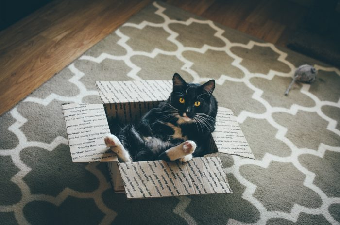 Tuxedo Cat in a box 700x464 Tuxedo Cat in a box Wallpaper lolcats