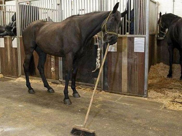 brooming horse brooming horse