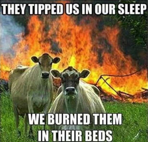 cow captions-make-the-photo-101013-24