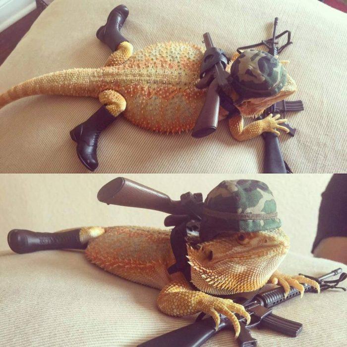military lizard.jpg