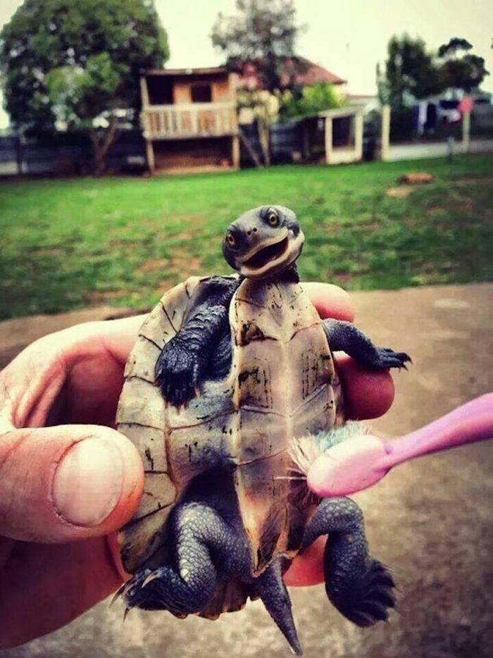 turtle belly rub.jpg