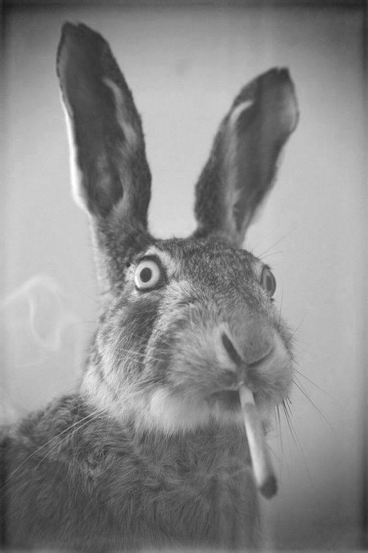 high bunny.jpg