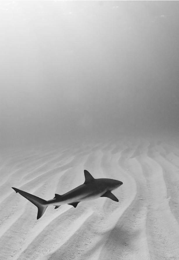 shark Friday-Breakdown-026-02272014