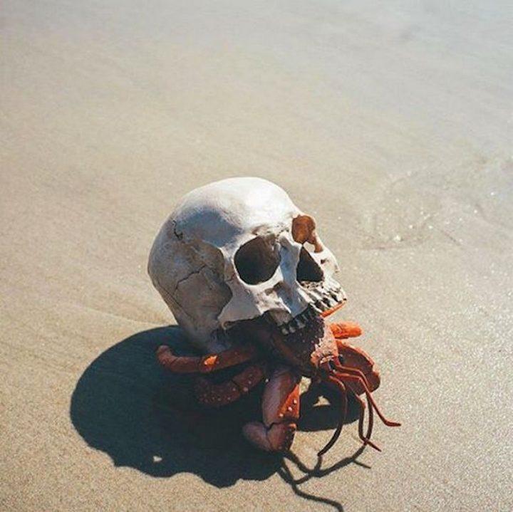 skull crab.jpg
