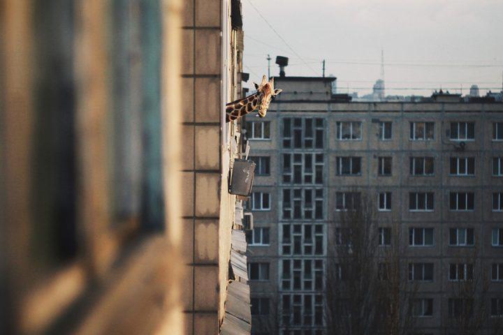 Apartment Giraffee.jpeg
