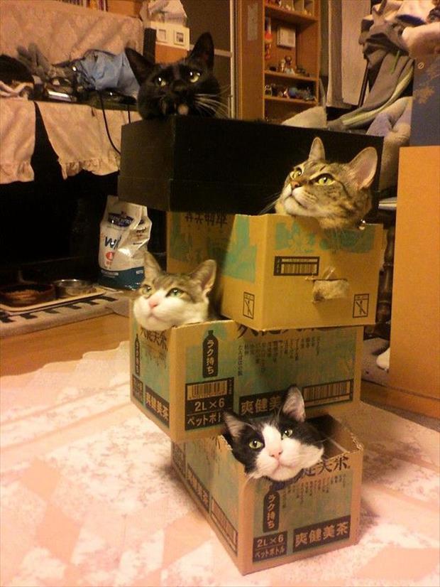 Kitty Jenga.jpg