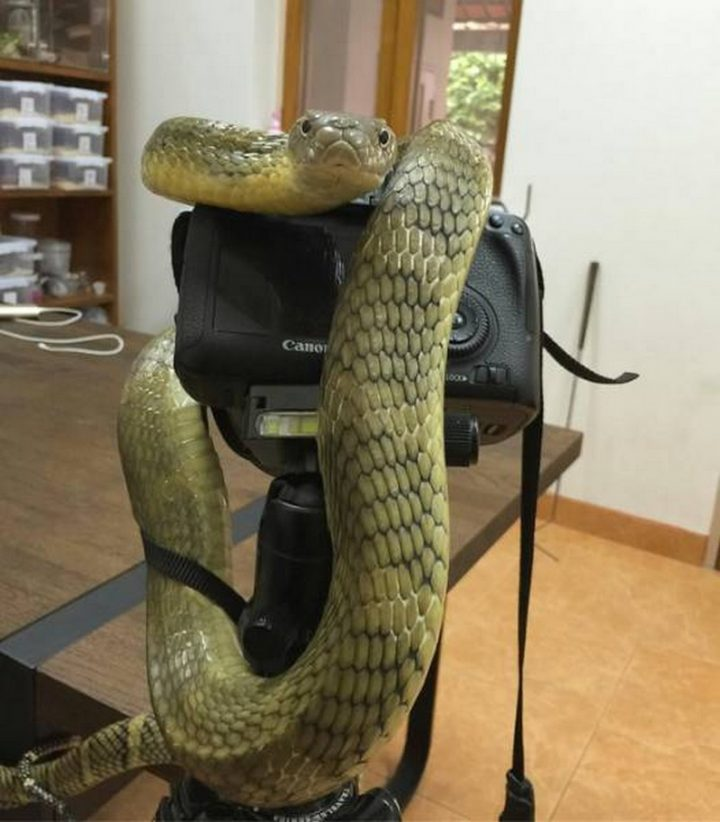 Snake Photography.jpg